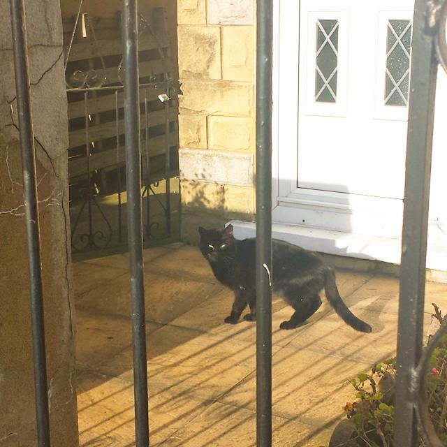This morning's #cat #instacats #catsofinstagram