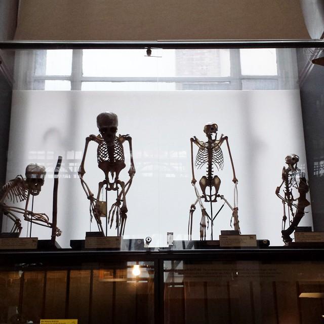 Looking at old bones @grantmuseum #london #museum #skeletons